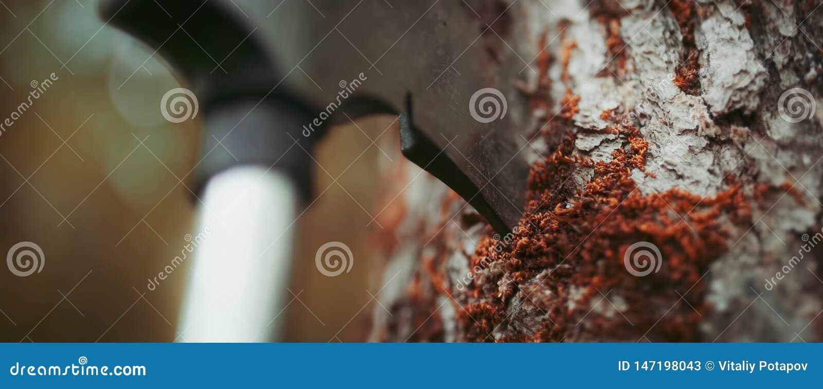 Machado colado em um close up do vidoeiro