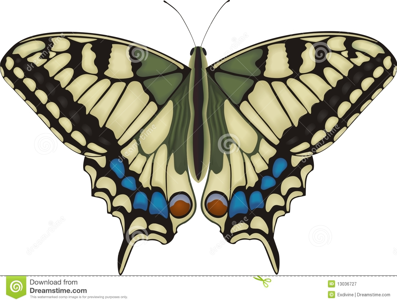 Diagram Of A Butterfly Machaon Stock Vector Illustration Papilio 13036727