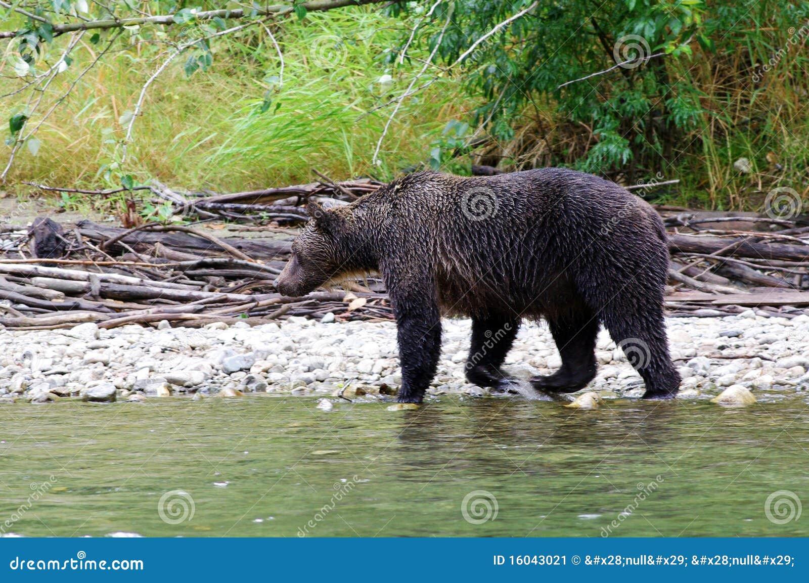Machen Sie Bären naß