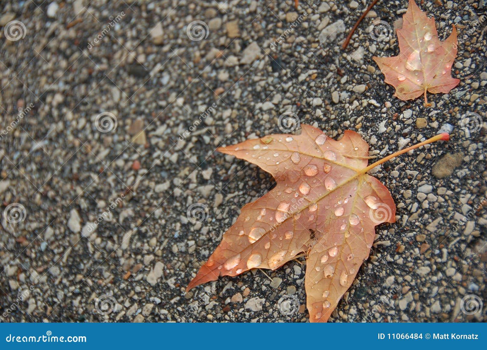 Machen Sie Blätter auf Plasterung naß