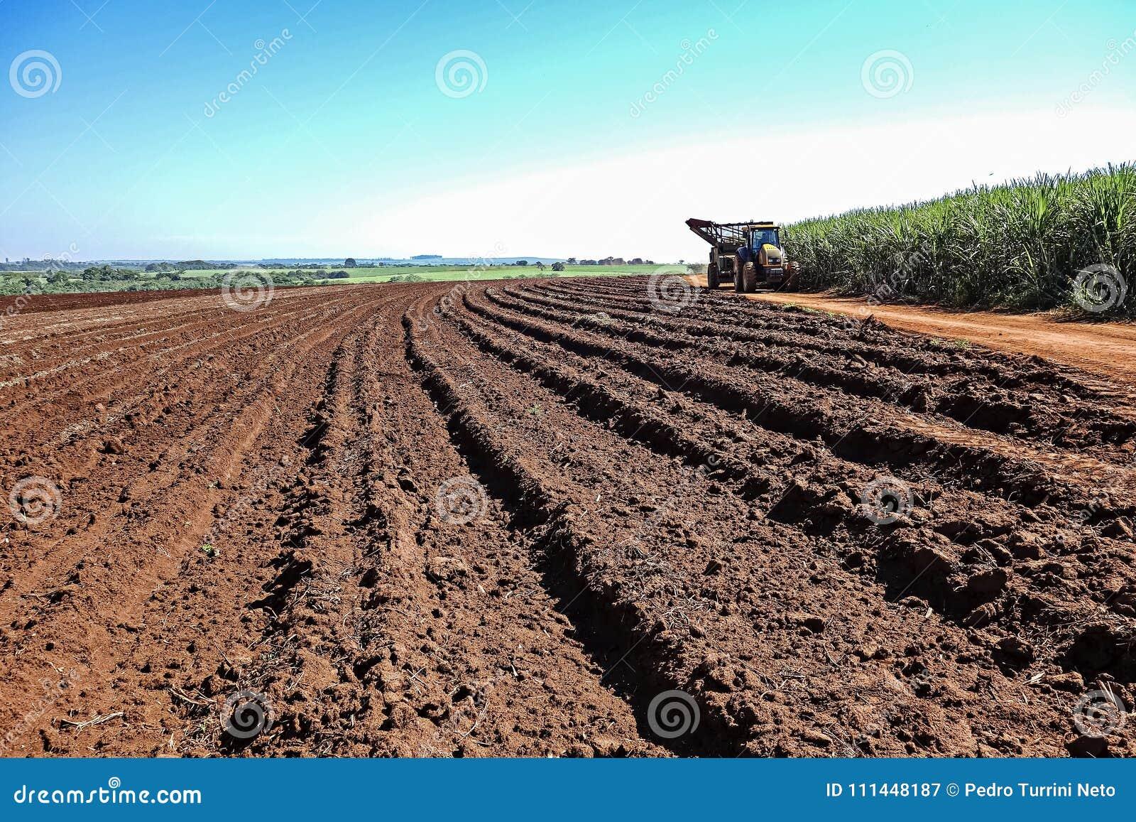 Machinalny zbiera trzciny cukrowa pole przy zmierzchem w Sao Paulo Brazylia - ciągnik na drodze gruntowej między zbierającą trzci