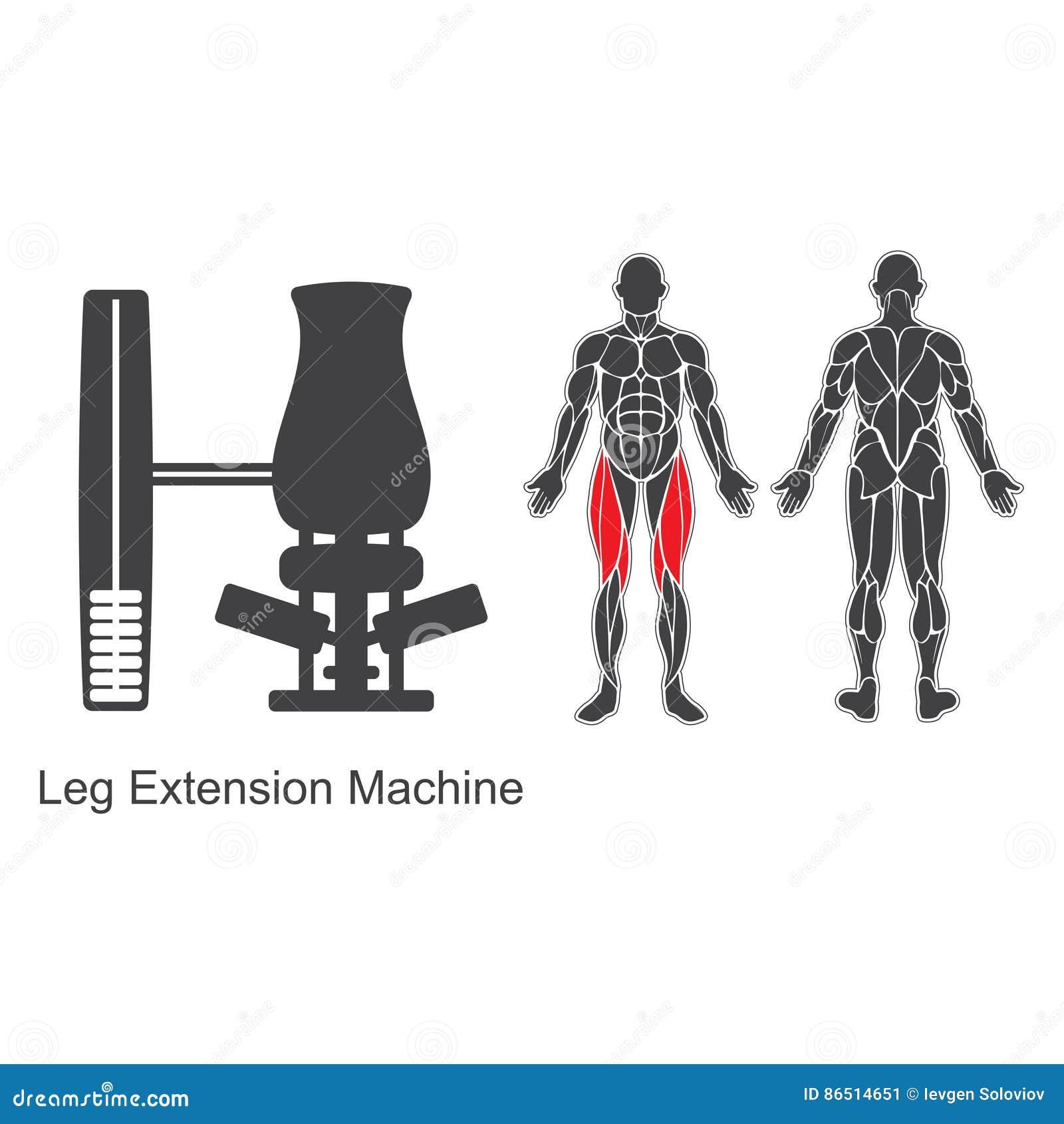 Machine d extension de jambe de gymnase