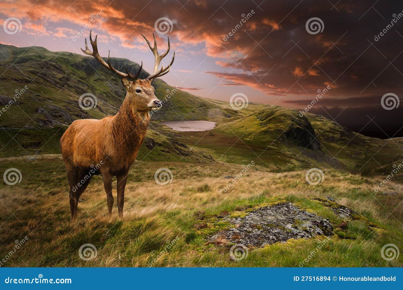 Macho de los ciervos rojos en paisaje dramático de la montaña