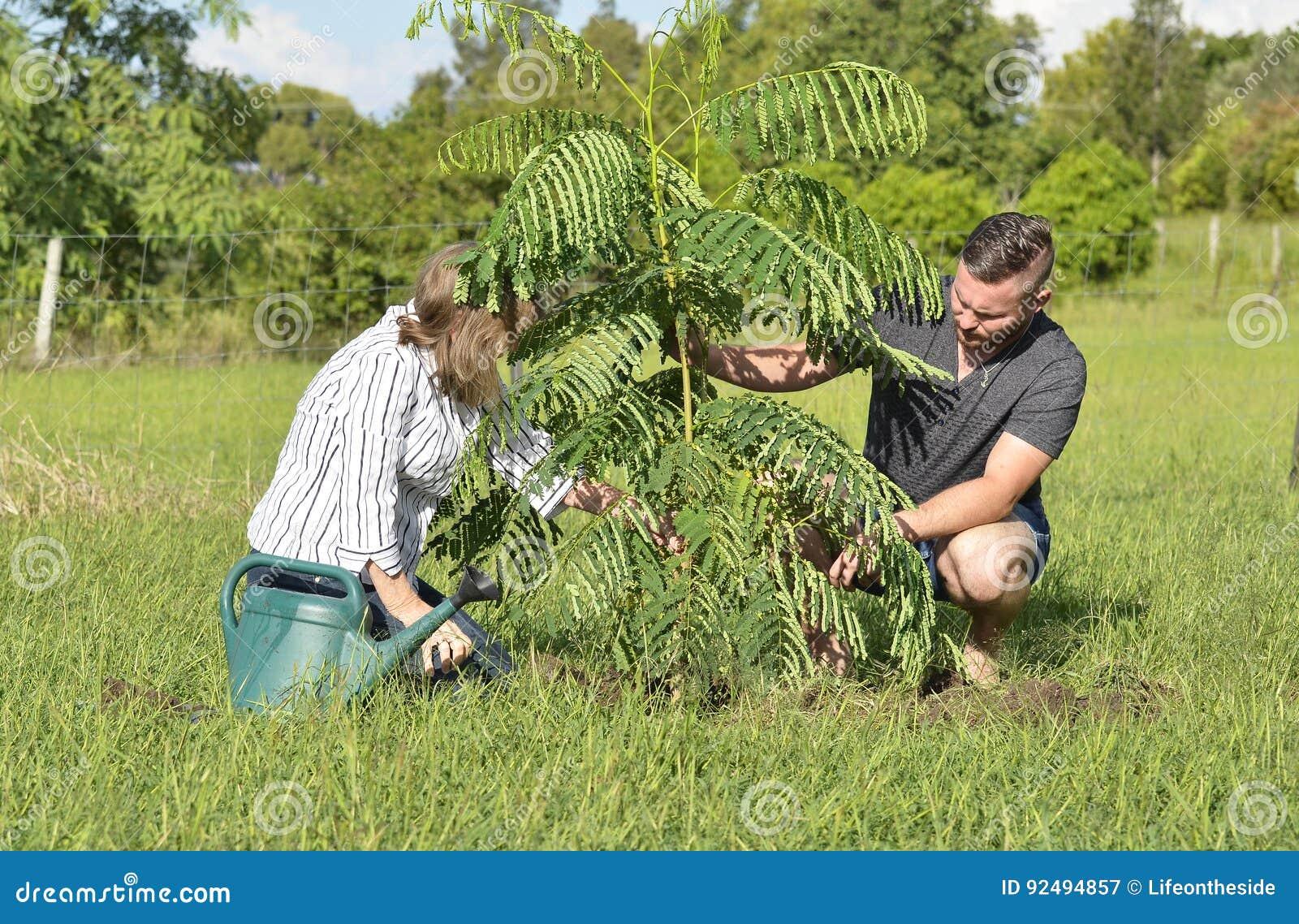 Macierzystego nauczania dorosły syn zasadza nowej opieki i drzewa
