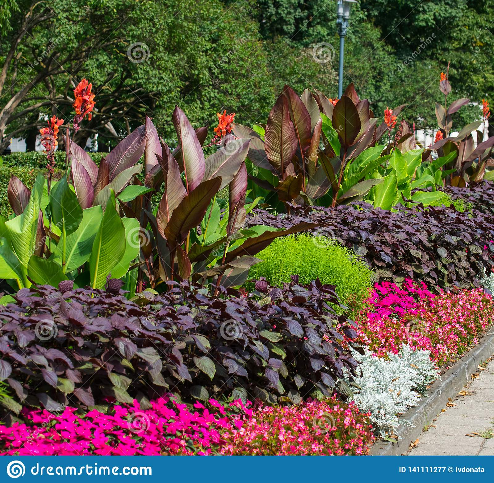 Macizos de flores coloridos florecientes en parque de la ciudad del verano en Riga