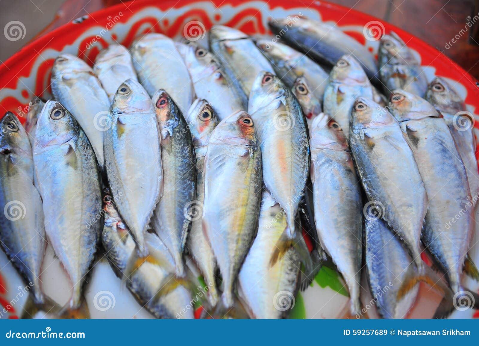 Mackerel stock photo image 59257689 for Local fish market