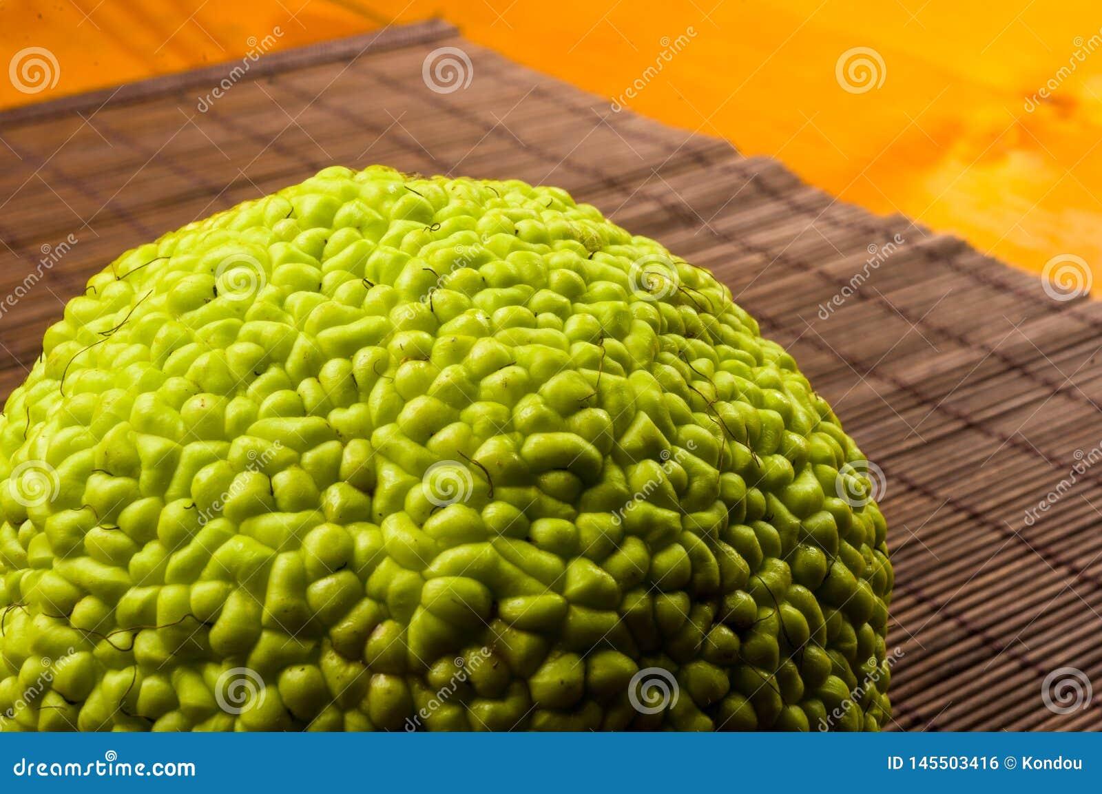 Maclura pomifera,哇洒琪橘,马苹果,喉绿色果子在竹席子增长