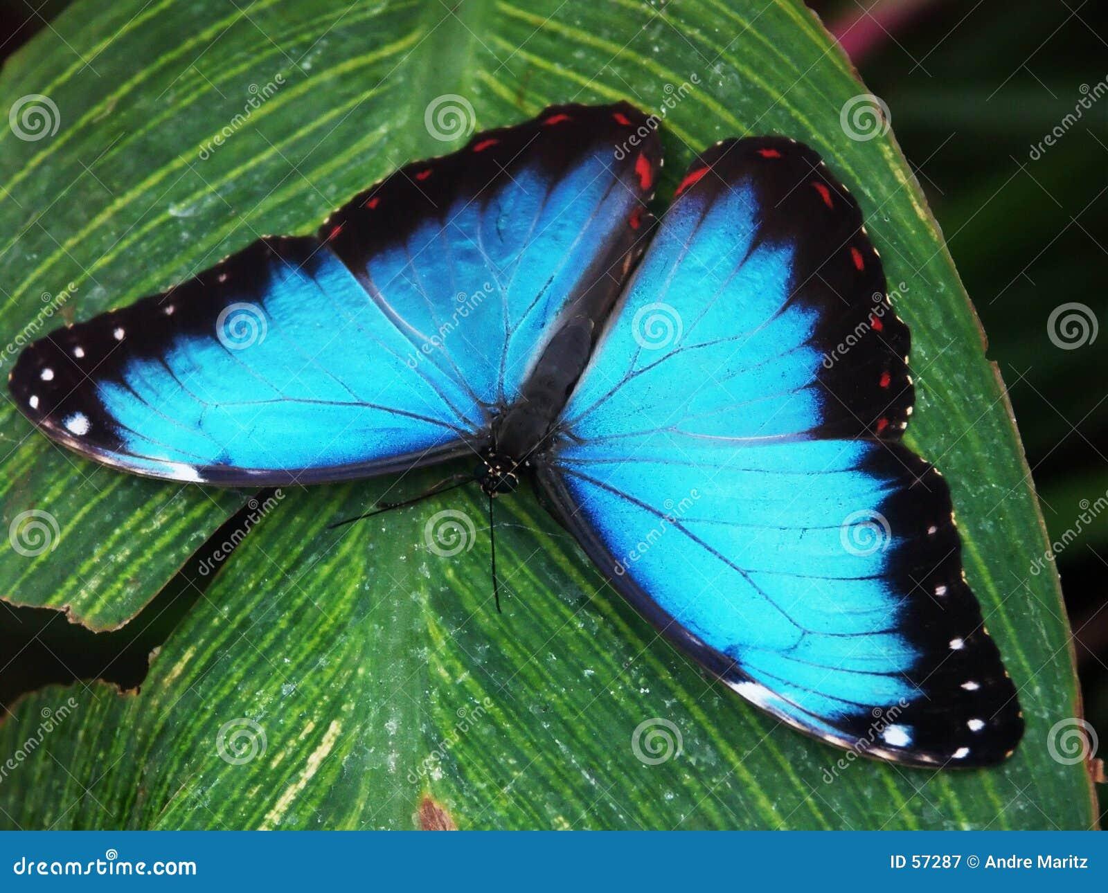 Macro #3 da borboleta