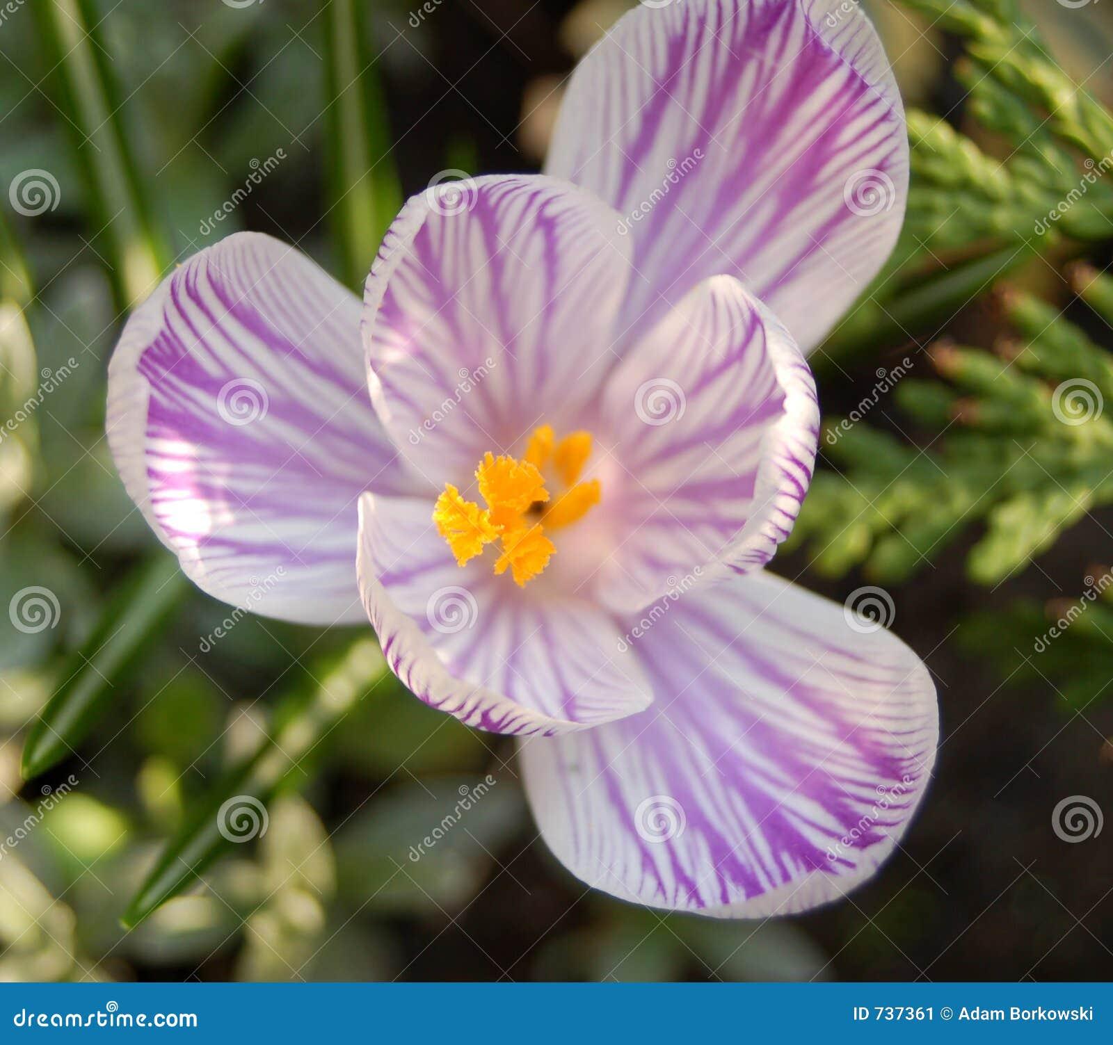 Macro #3 da flor