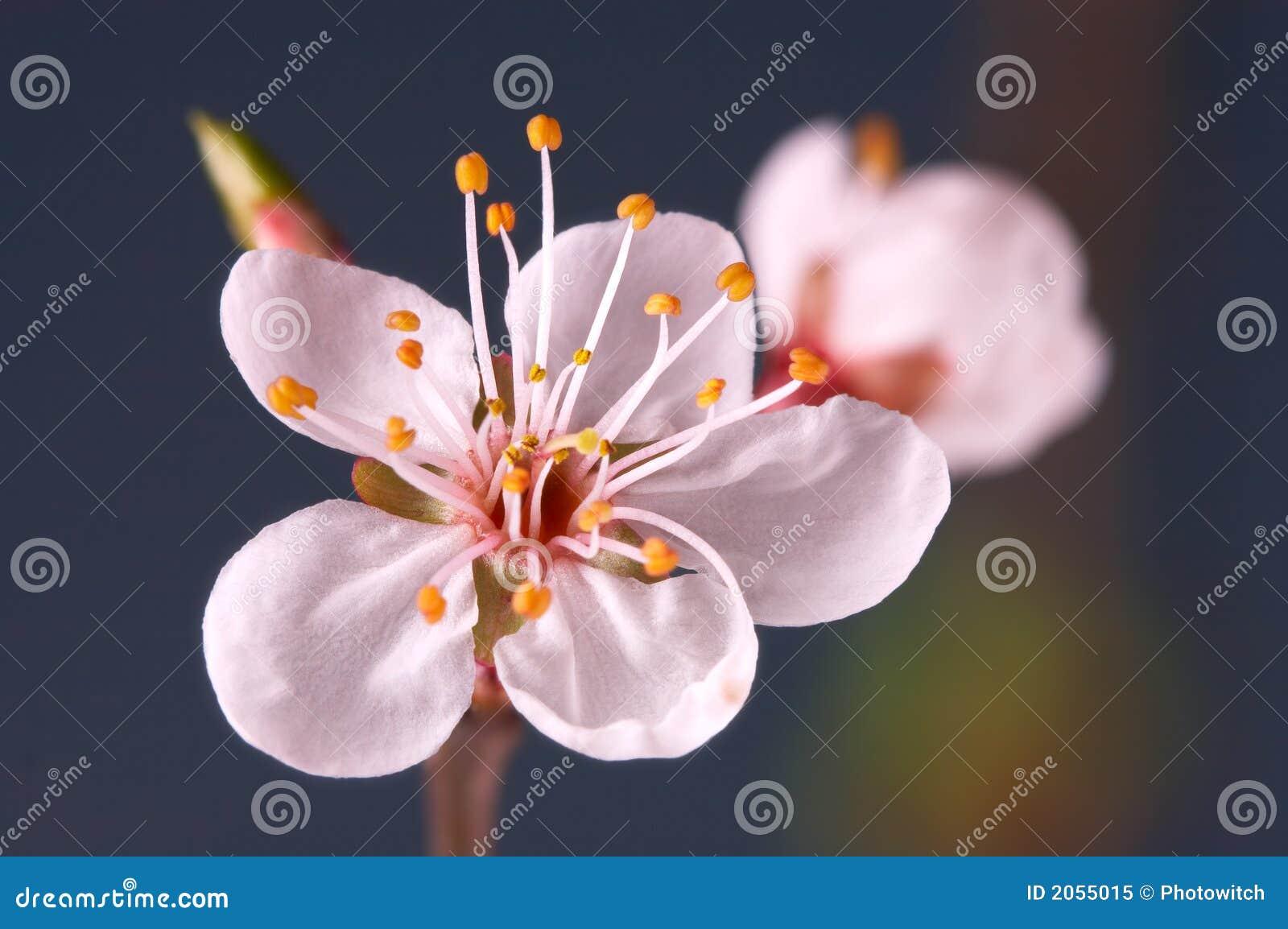 Macro of blossom