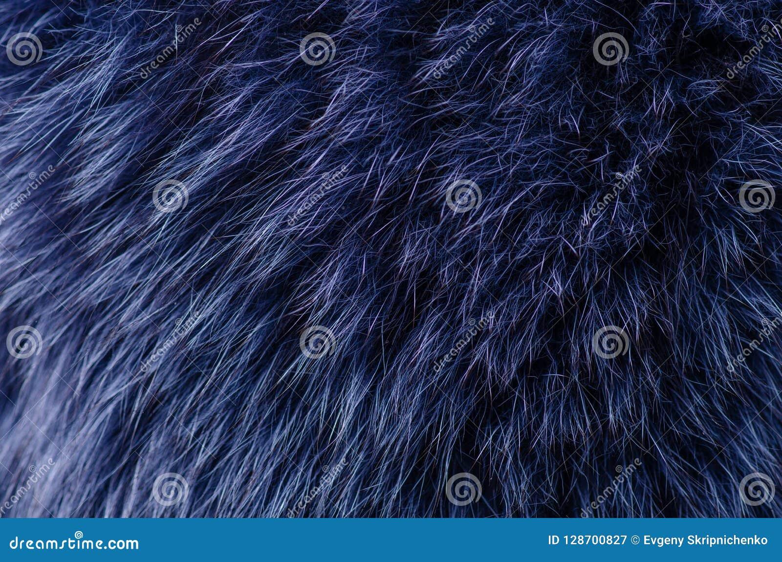 Macro blu della pelliccia