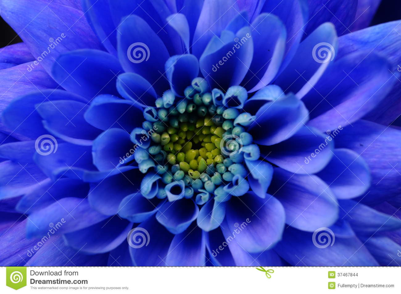 Macro Of Blue Aster Flower Stock Photo Image Of Texture 37467844