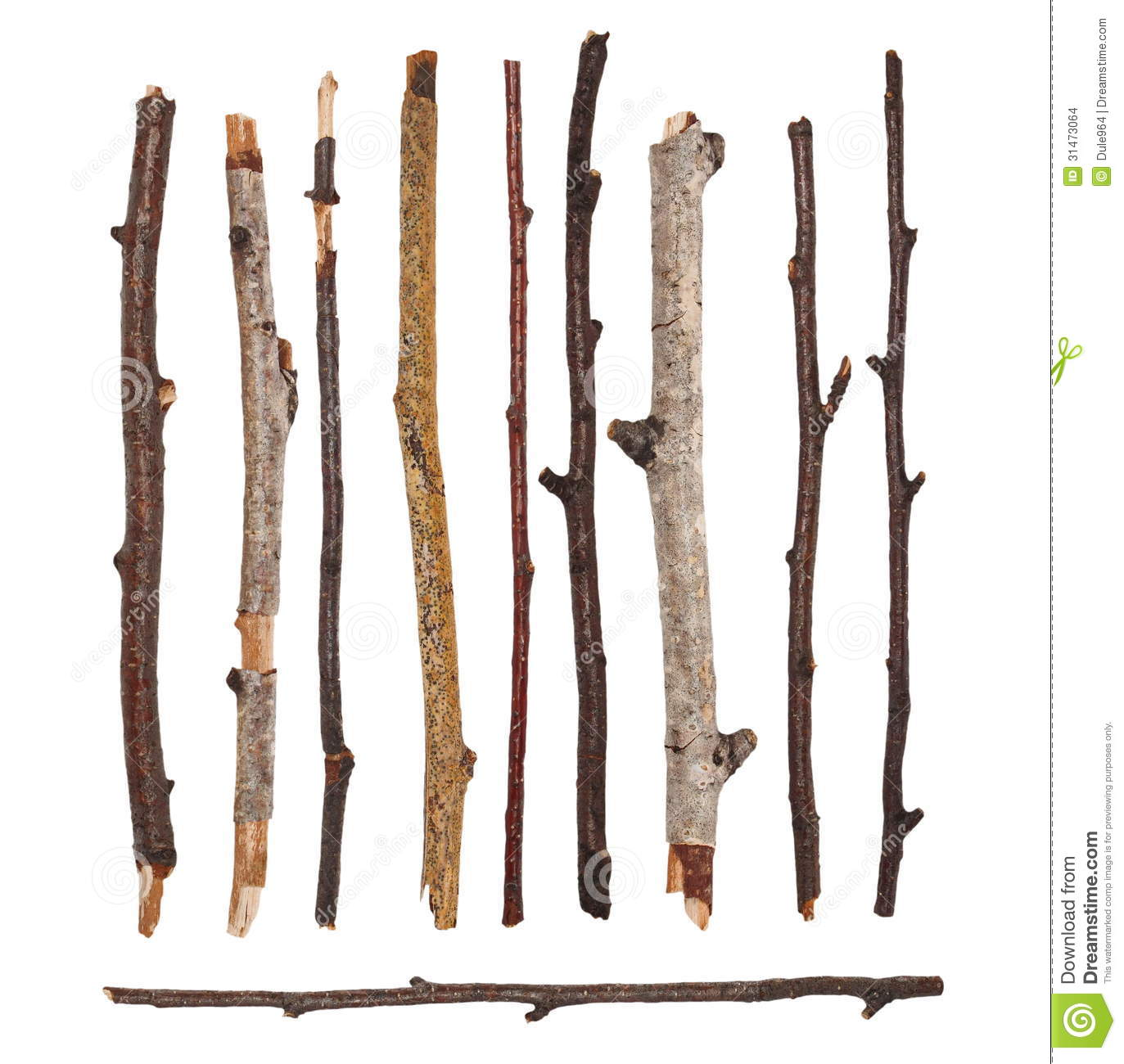 Oak Wood Branches ~ Macro branches isolated stock images image