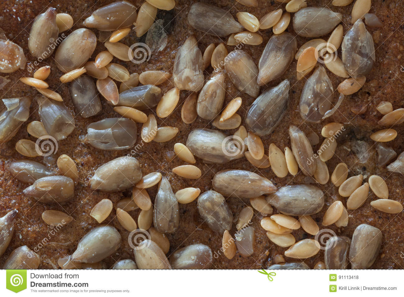 Download Macro Of A Bread With Seeds, Top Part Stock Photo - Image of closeup, loaf: 91113418