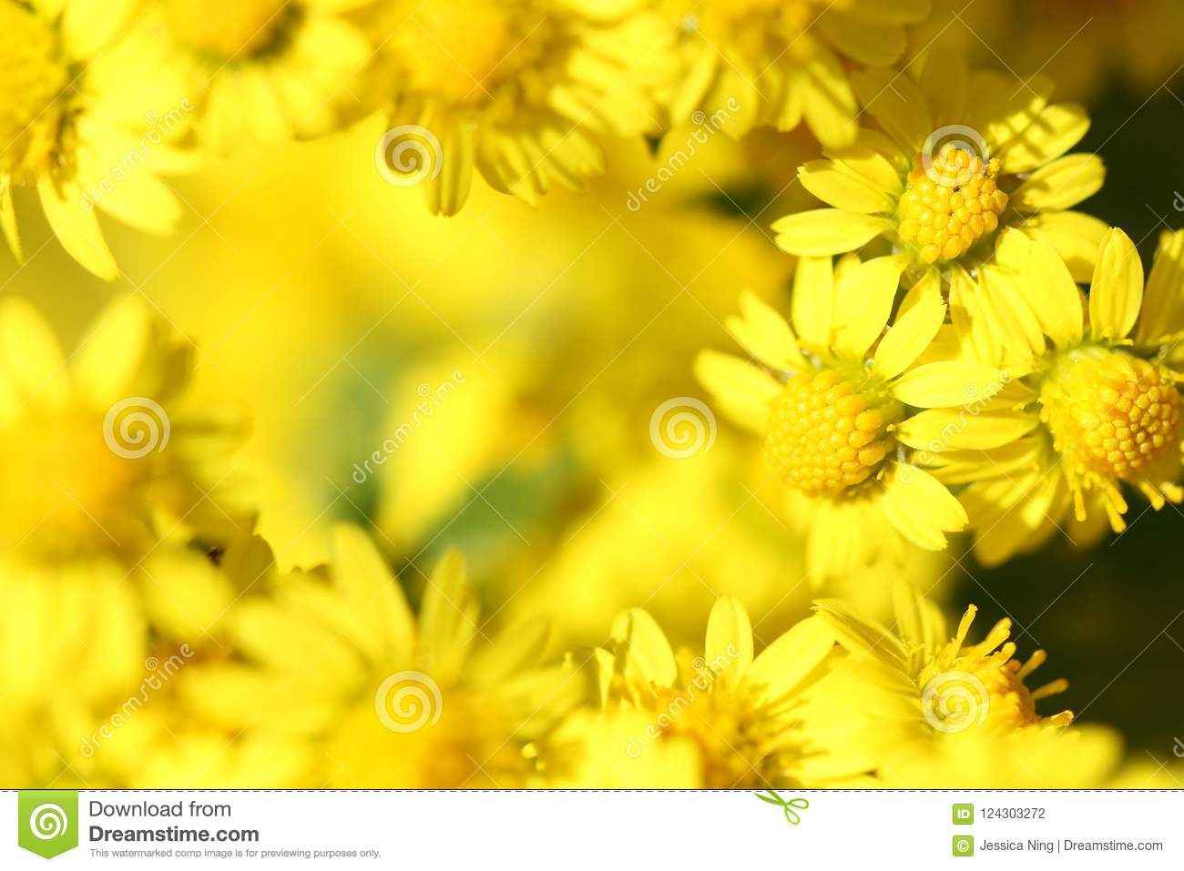 Macro of brilliant wild yellow little daisy flowers stock photo download macro of brilliant wild yellow little daisy flowers stock photo image of bright izmirmasajfo