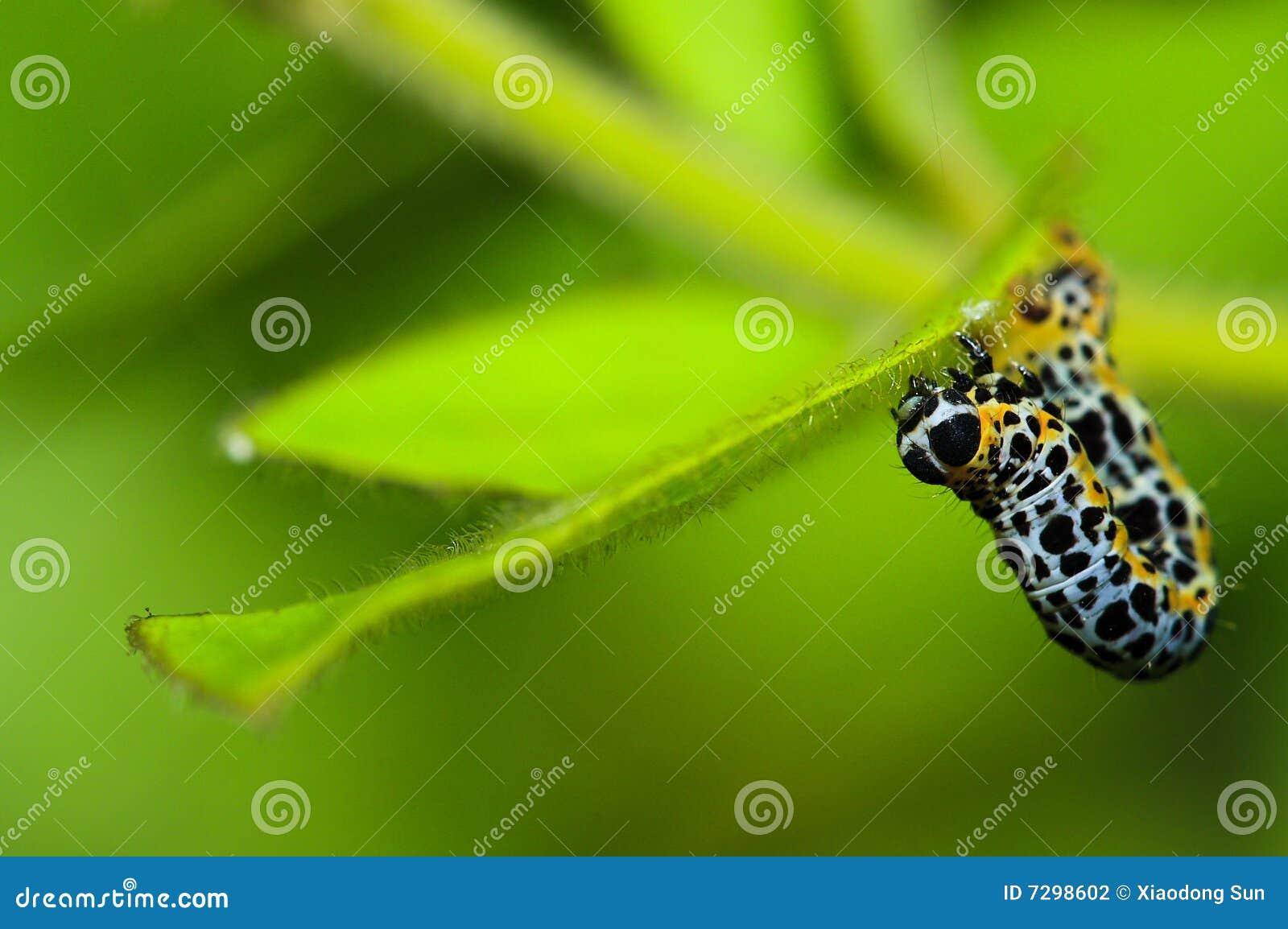Macro caterpillar creeping