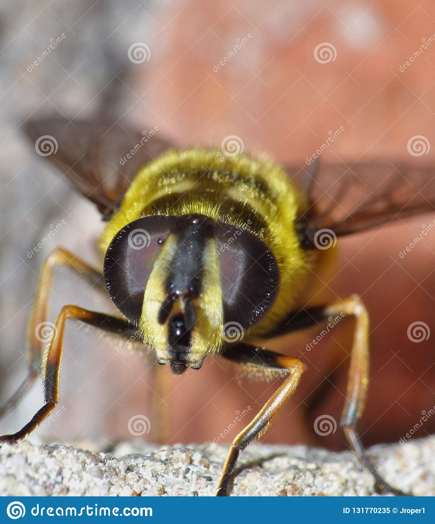 Macro close up of bee, photo taken in the UK