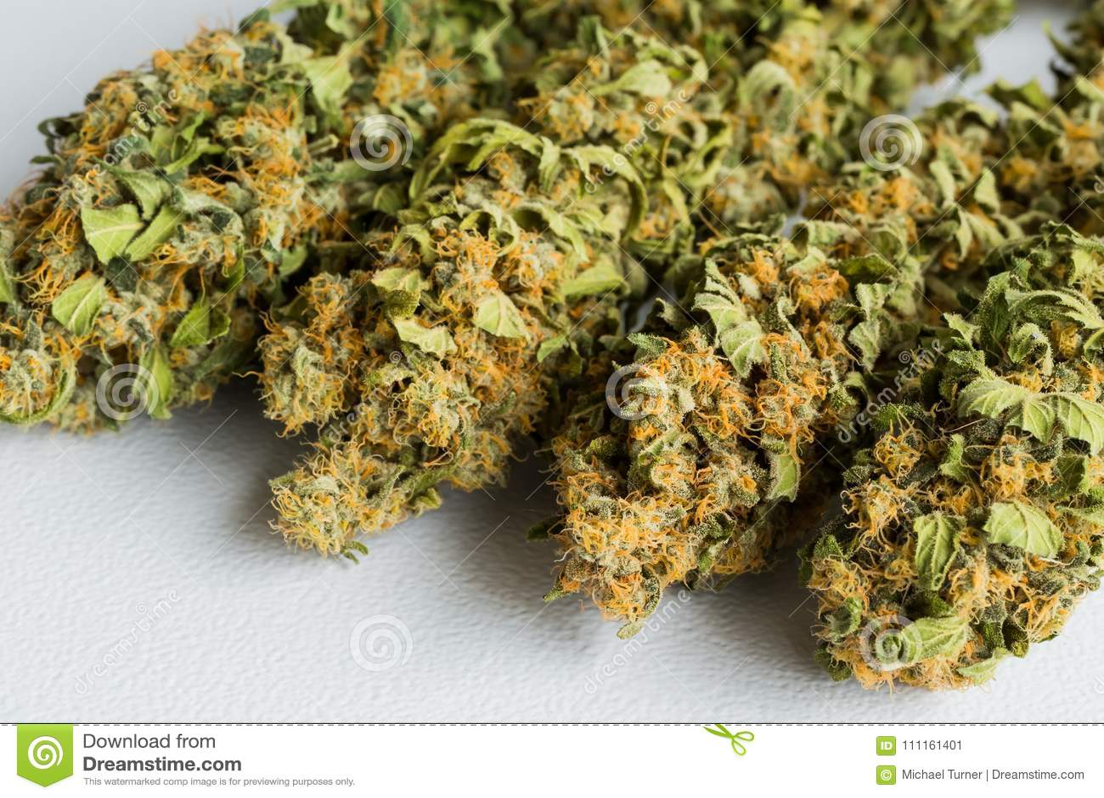 Macro close up of a dried Cannabis Medical Marijuana plant with