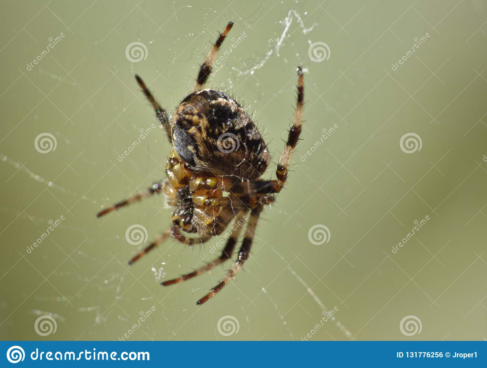 Macro close up of a spider int he garden, photo taken in the UK