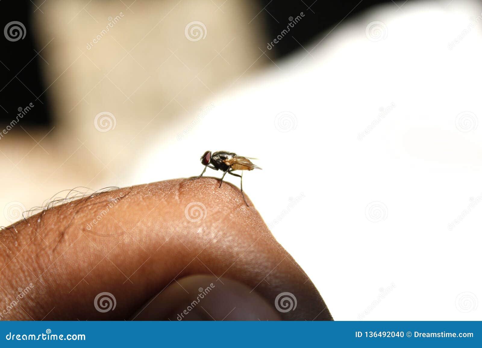 Macro colpo della mosca su fondo blured