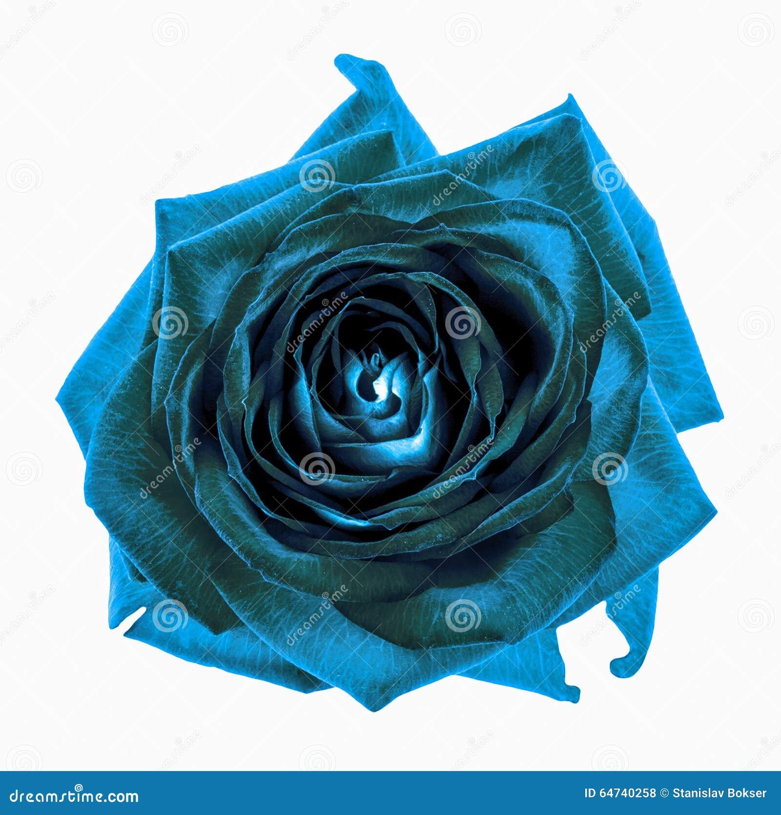 macro cyan de fleur de rose de chrome foncé surréaliste d