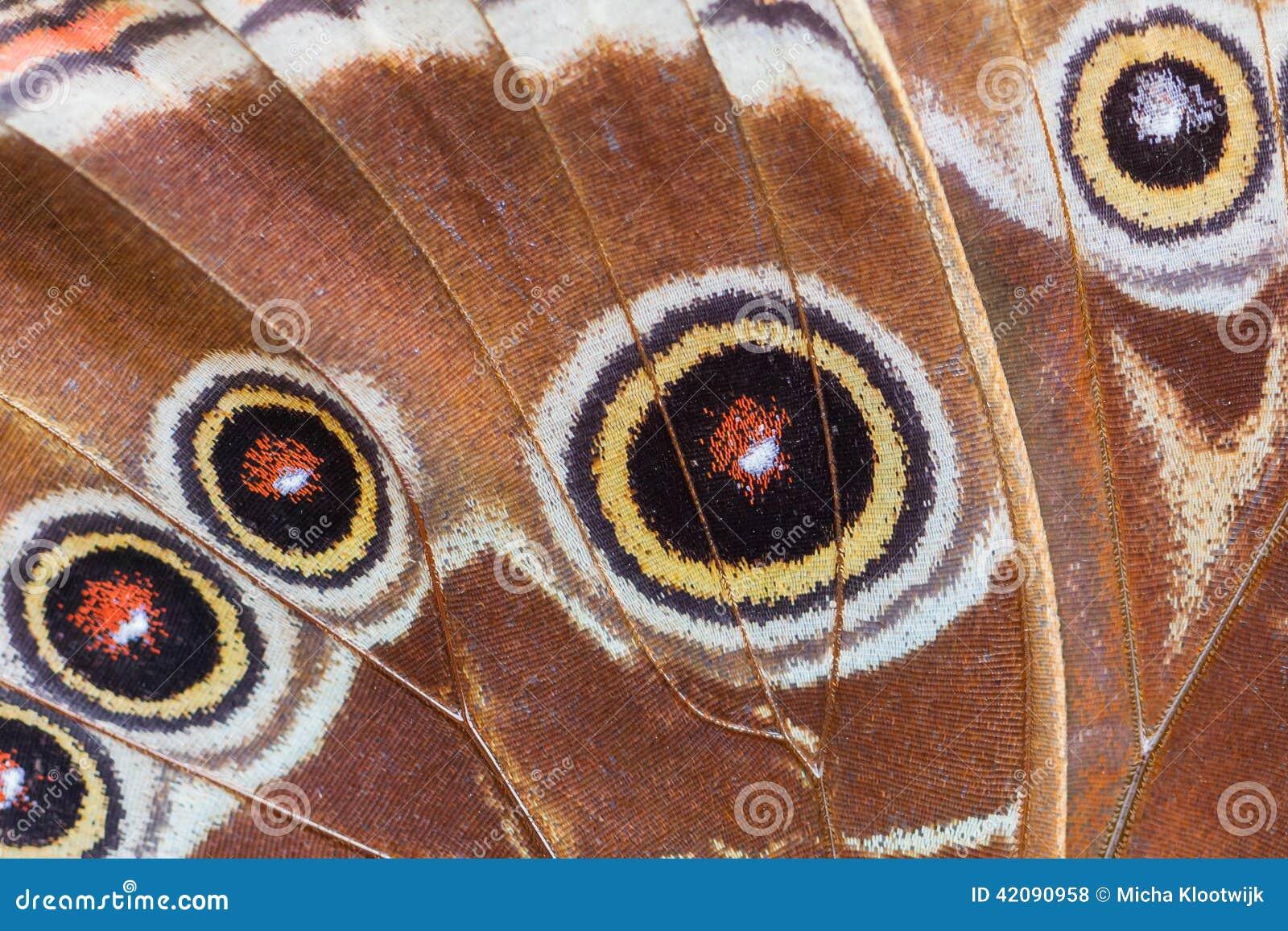 Macro détaillé d aile tropicale de papillon
