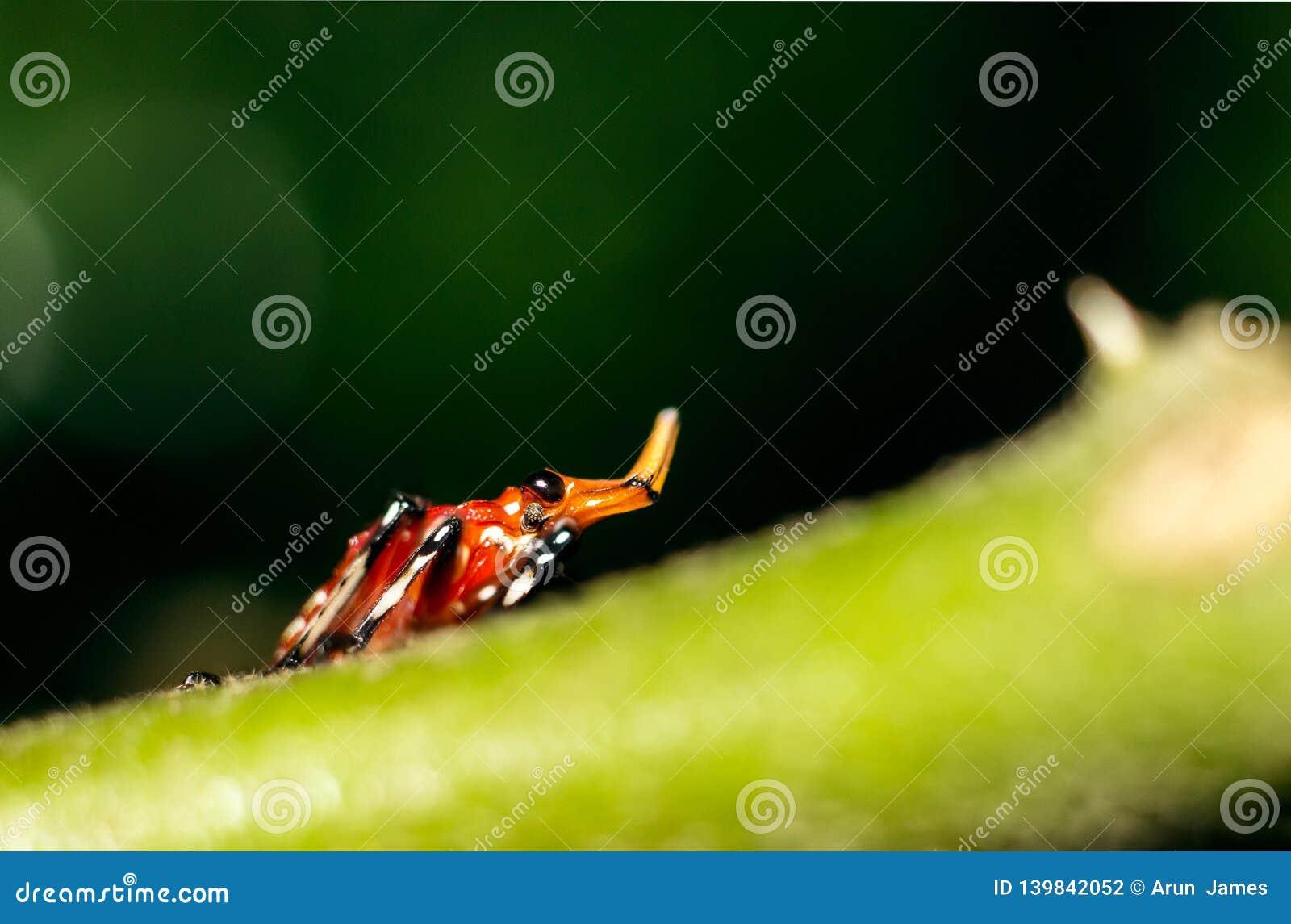 Macro d un insecte avec le klaxon intéressant