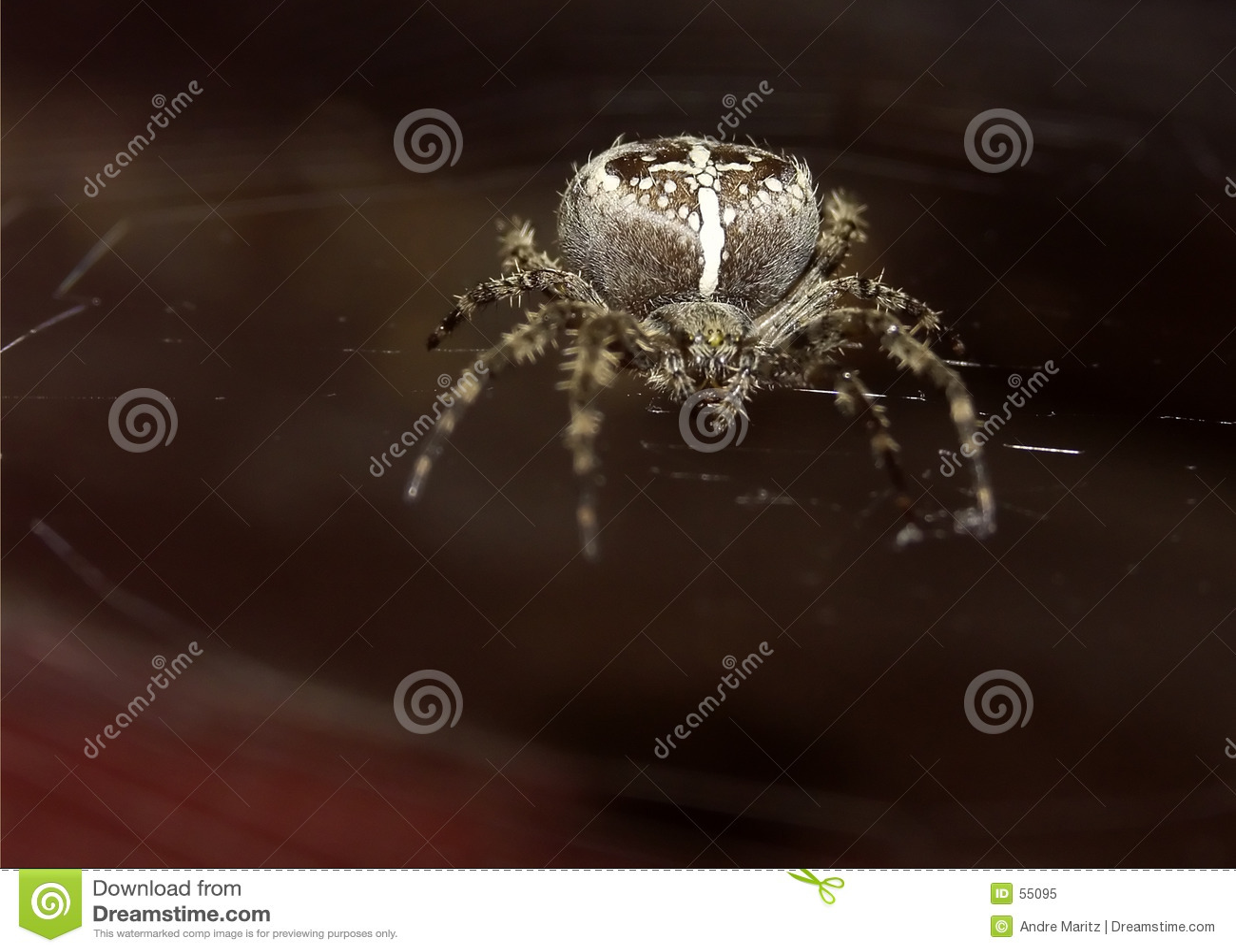 Macro da aranha