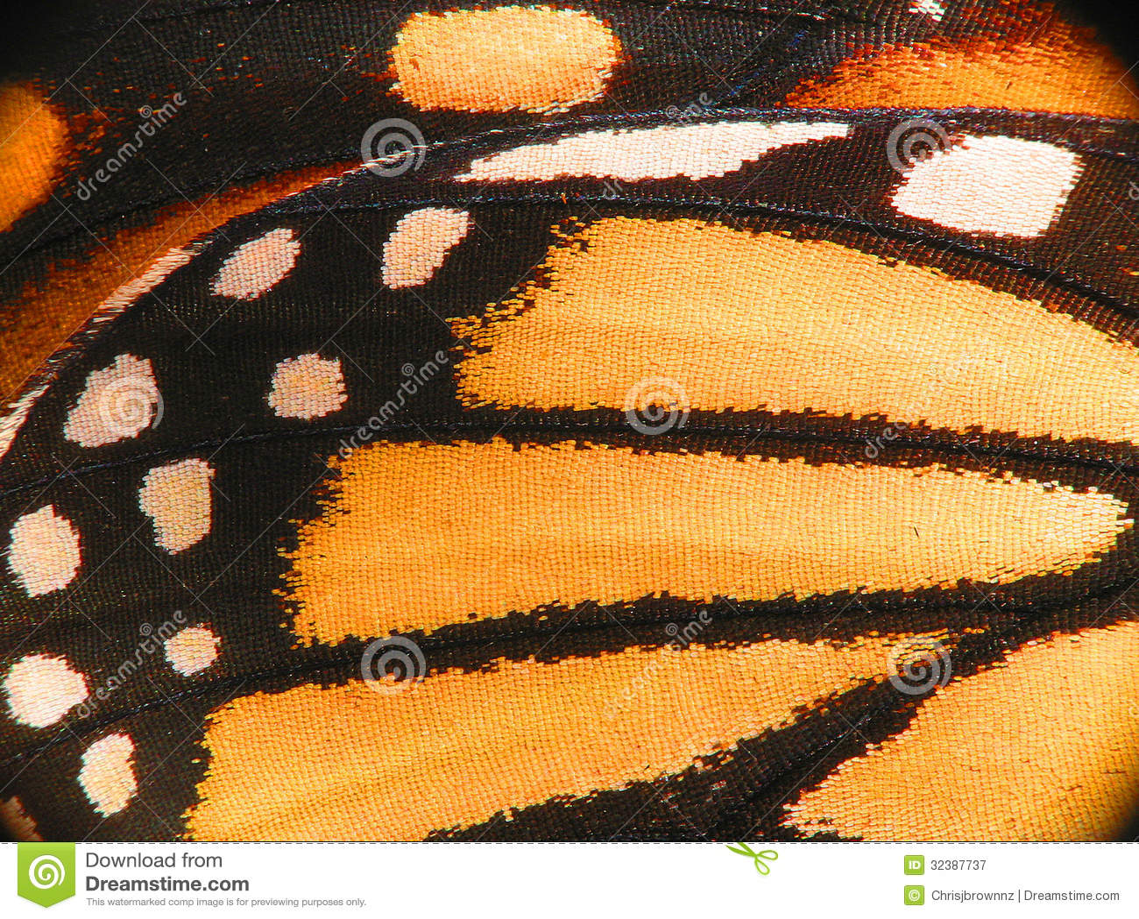 Macro da asa da borboleta de monarca
