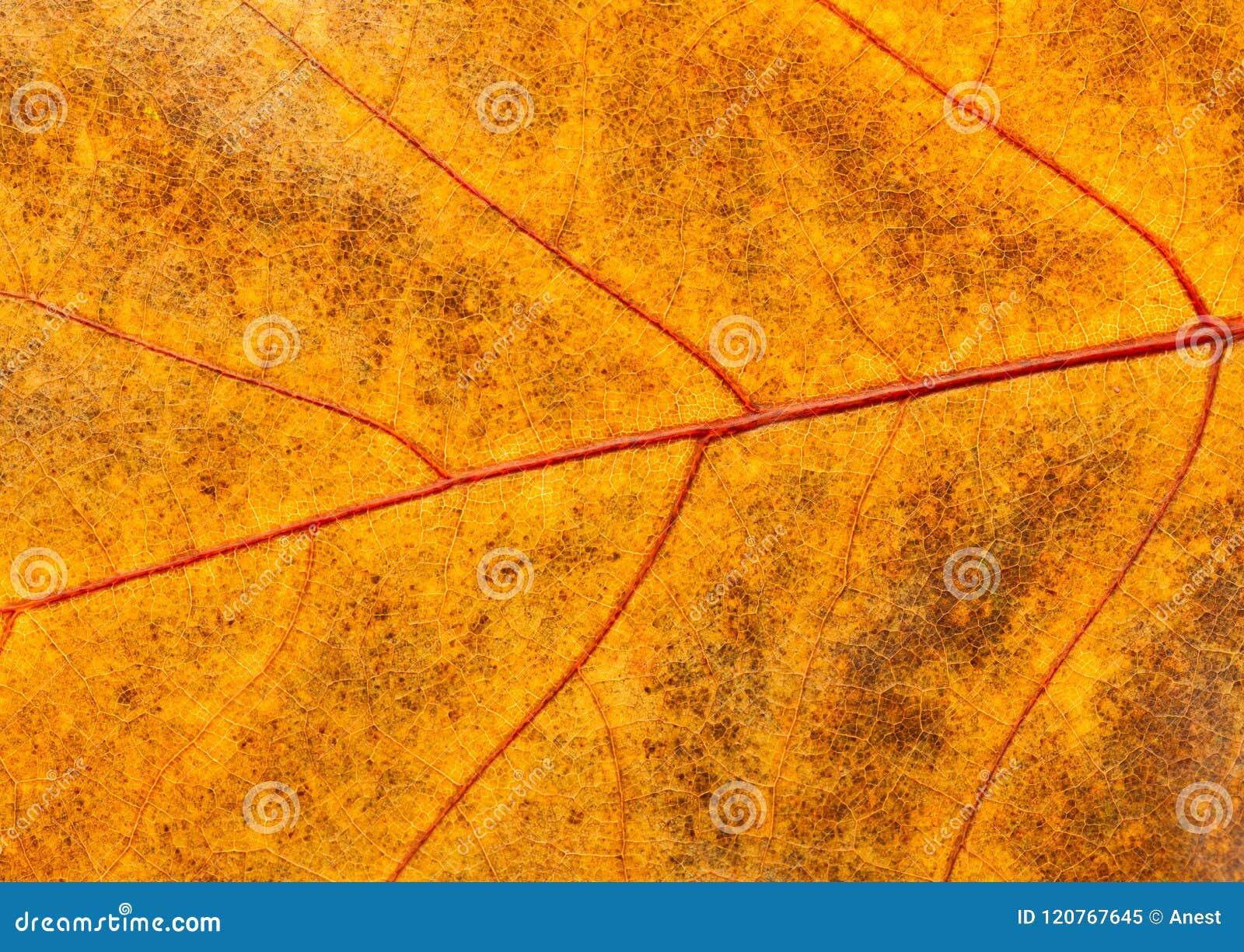 Macro da folha inoperante