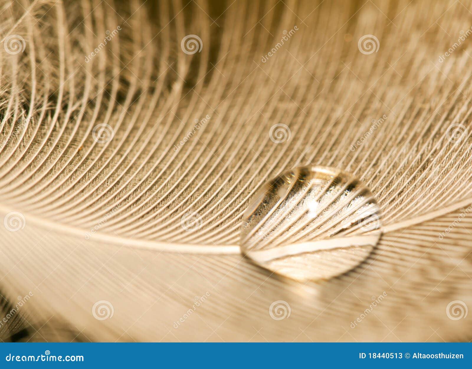 Macro da gota da água na pena branca