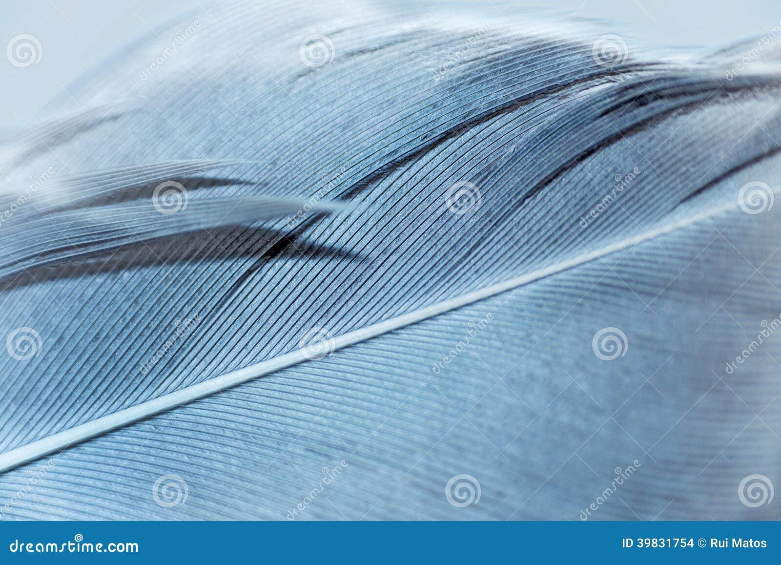 Macro de plume