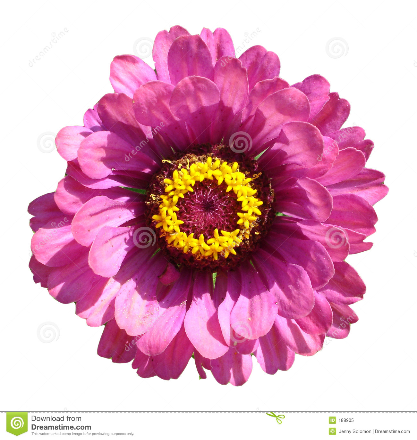 Macro de una flor