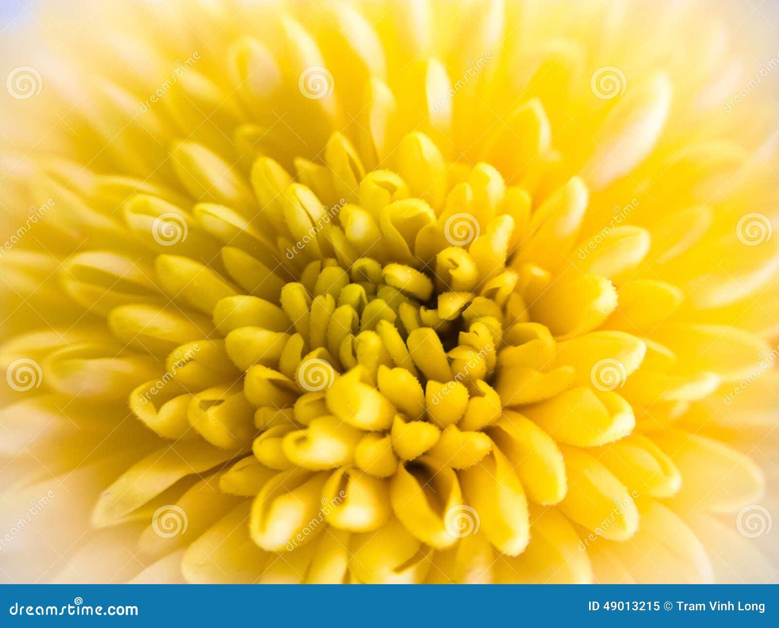 Macro de una flor amarilla