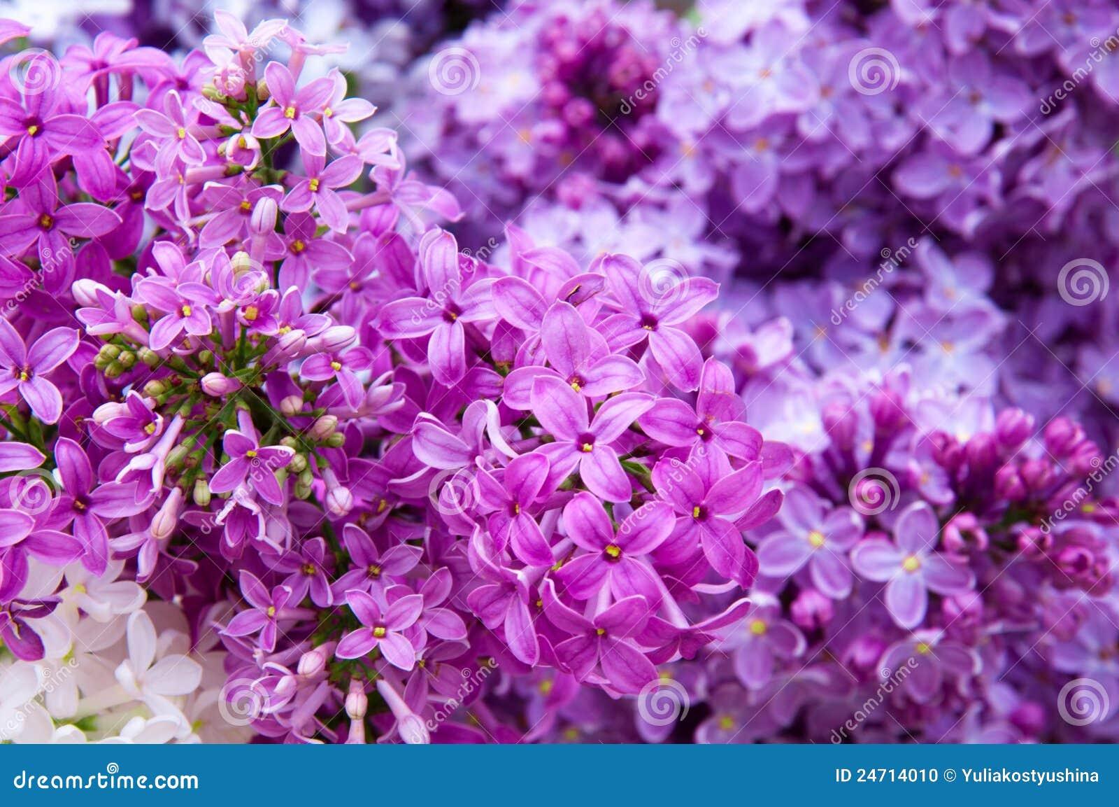 fiori a cespuglio