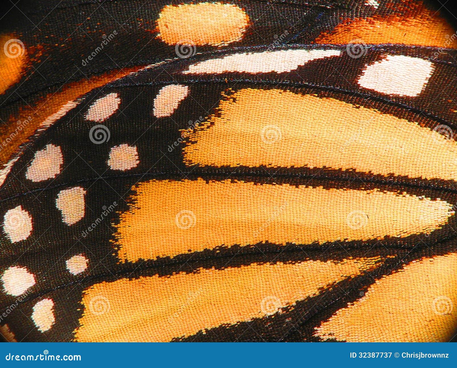 Macro del ala de la mariposa de monarca