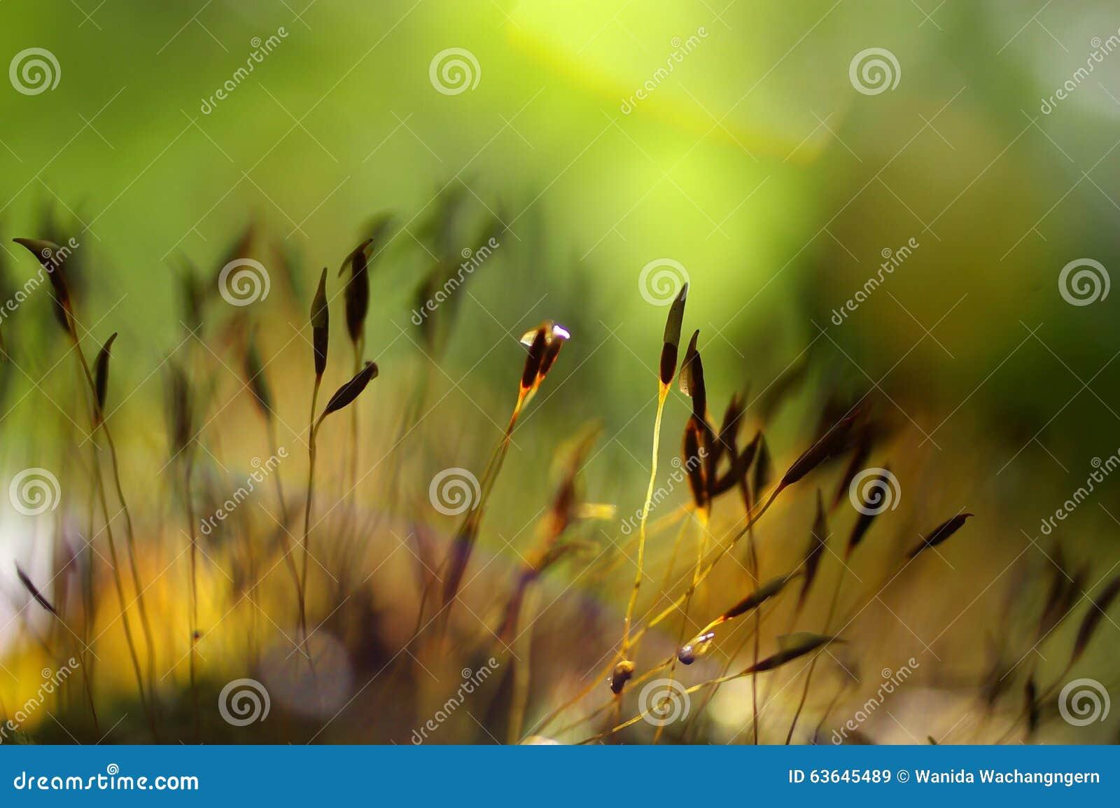 Macro del musgo verde