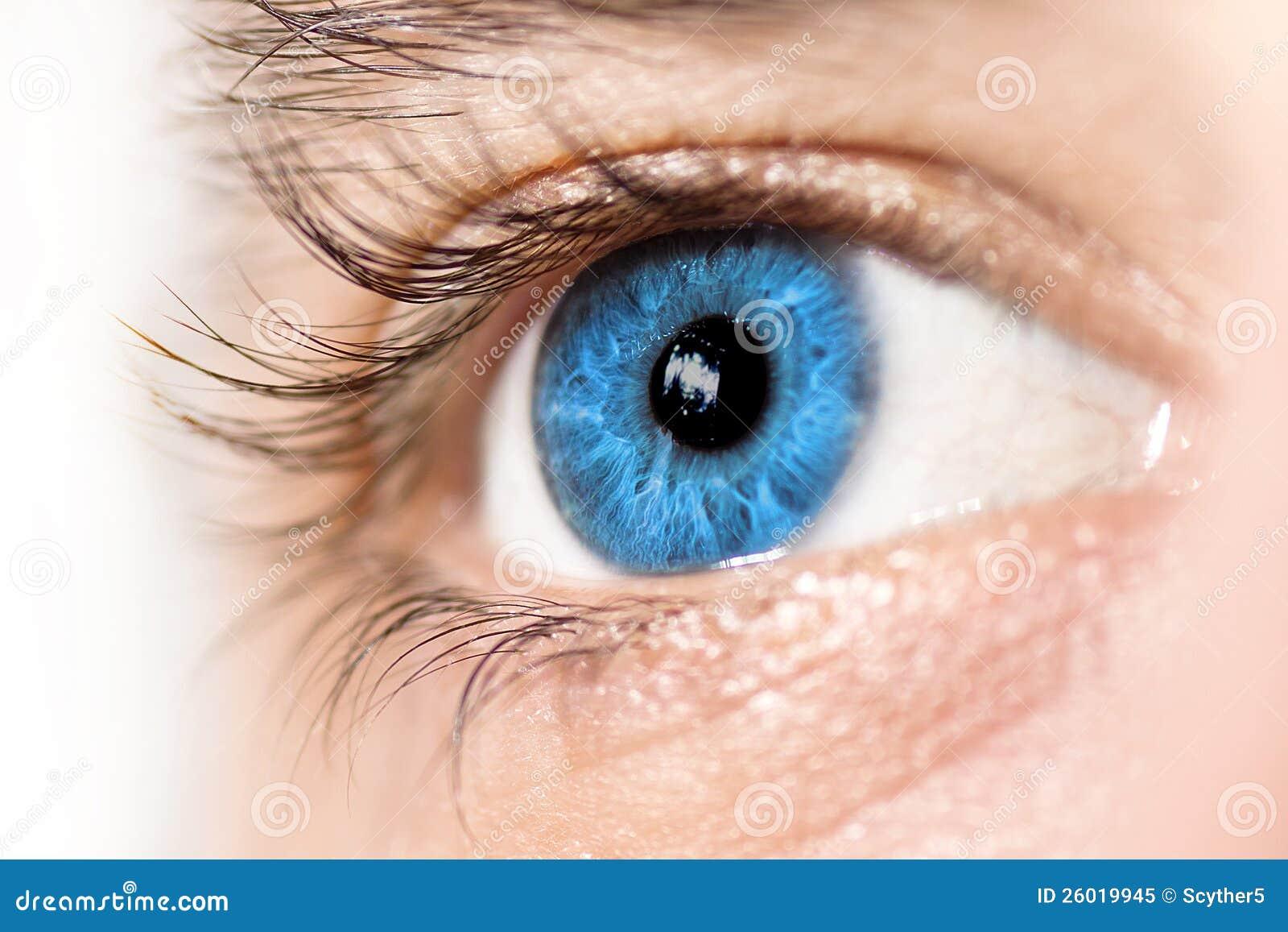 macro dell occhio azzurro immagine stock immagine di eyeball vector illustration eyeball vector image