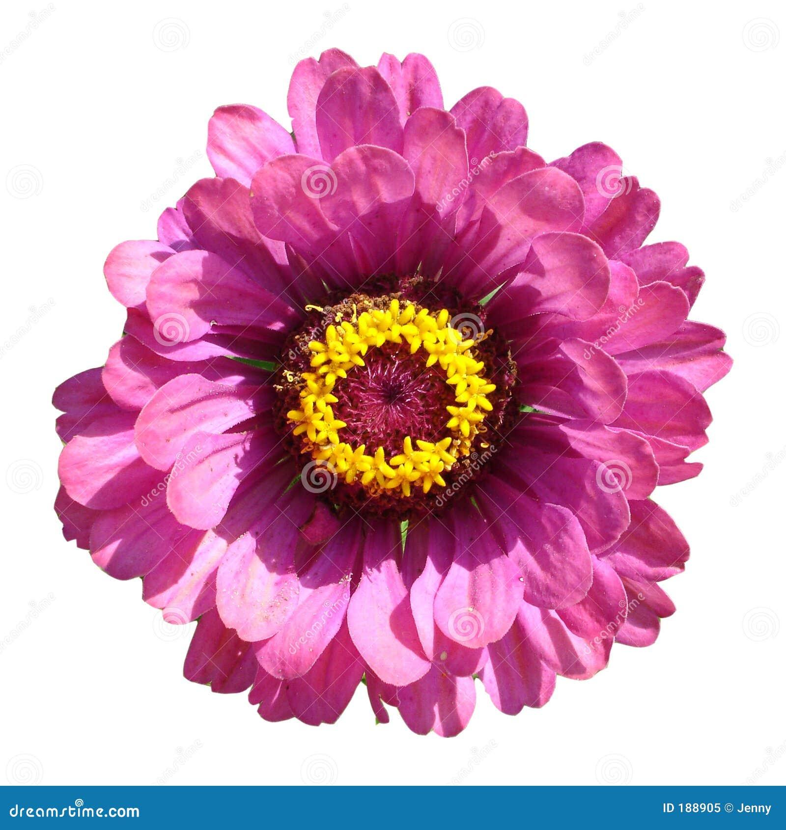 Macro di un fiore