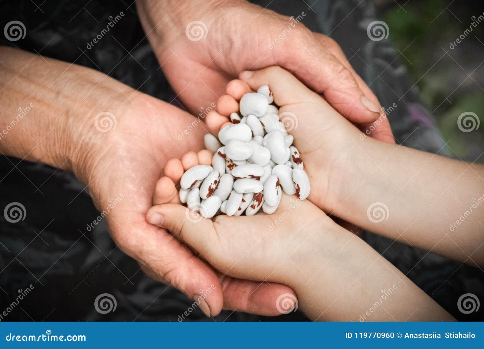 Macro die met ondiepe diepte van gebied van ruwe witte nierbenas wordt geschoten Witte nierbonen met rode vlekken in de handen va