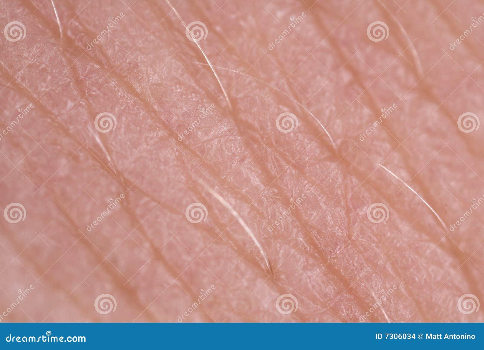 Macro eccellente di struttura della pelle