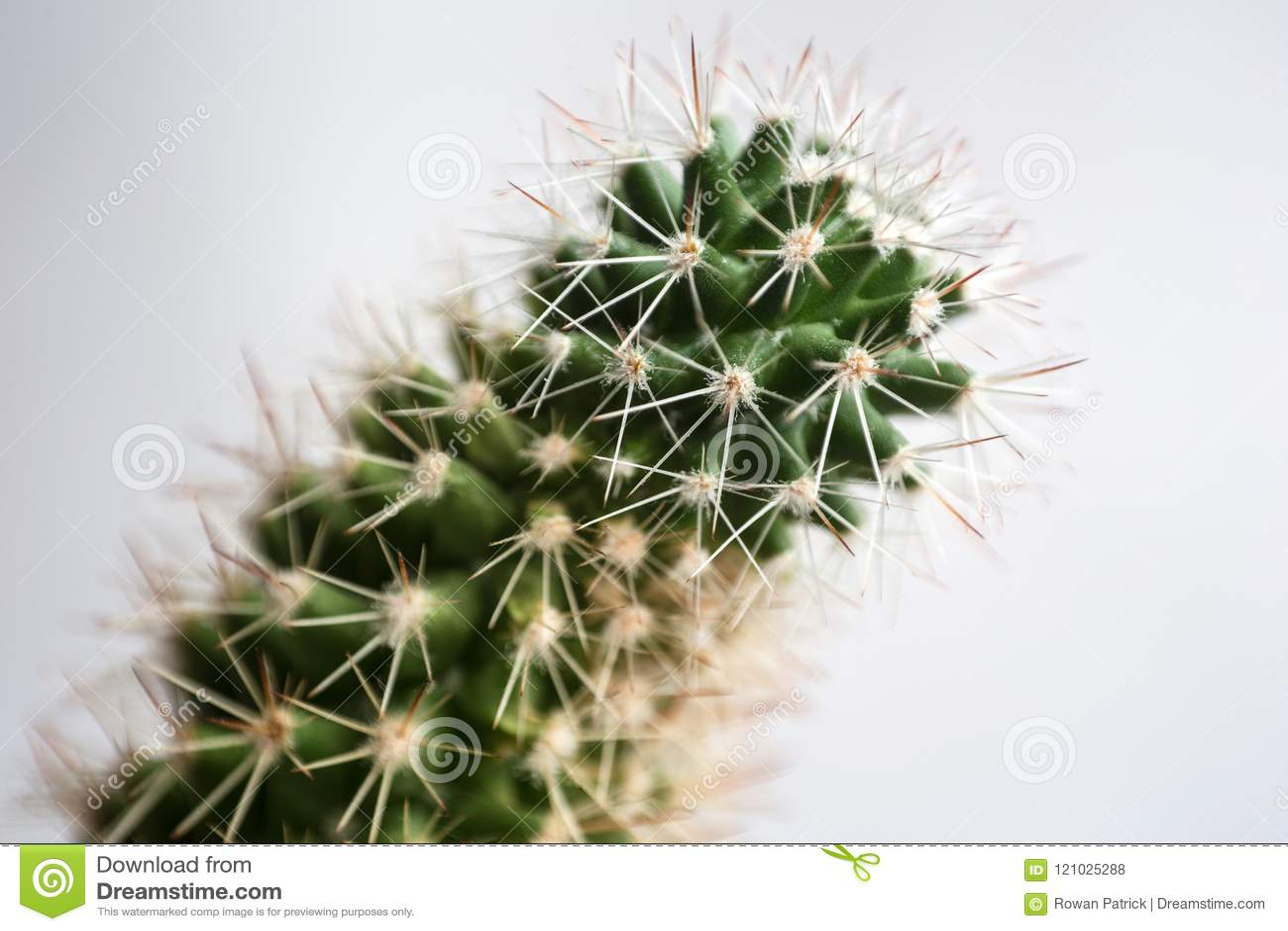 Macro estratto del cactus