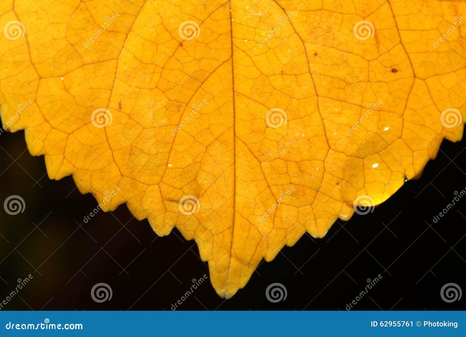 Macro extremo da folha do outono