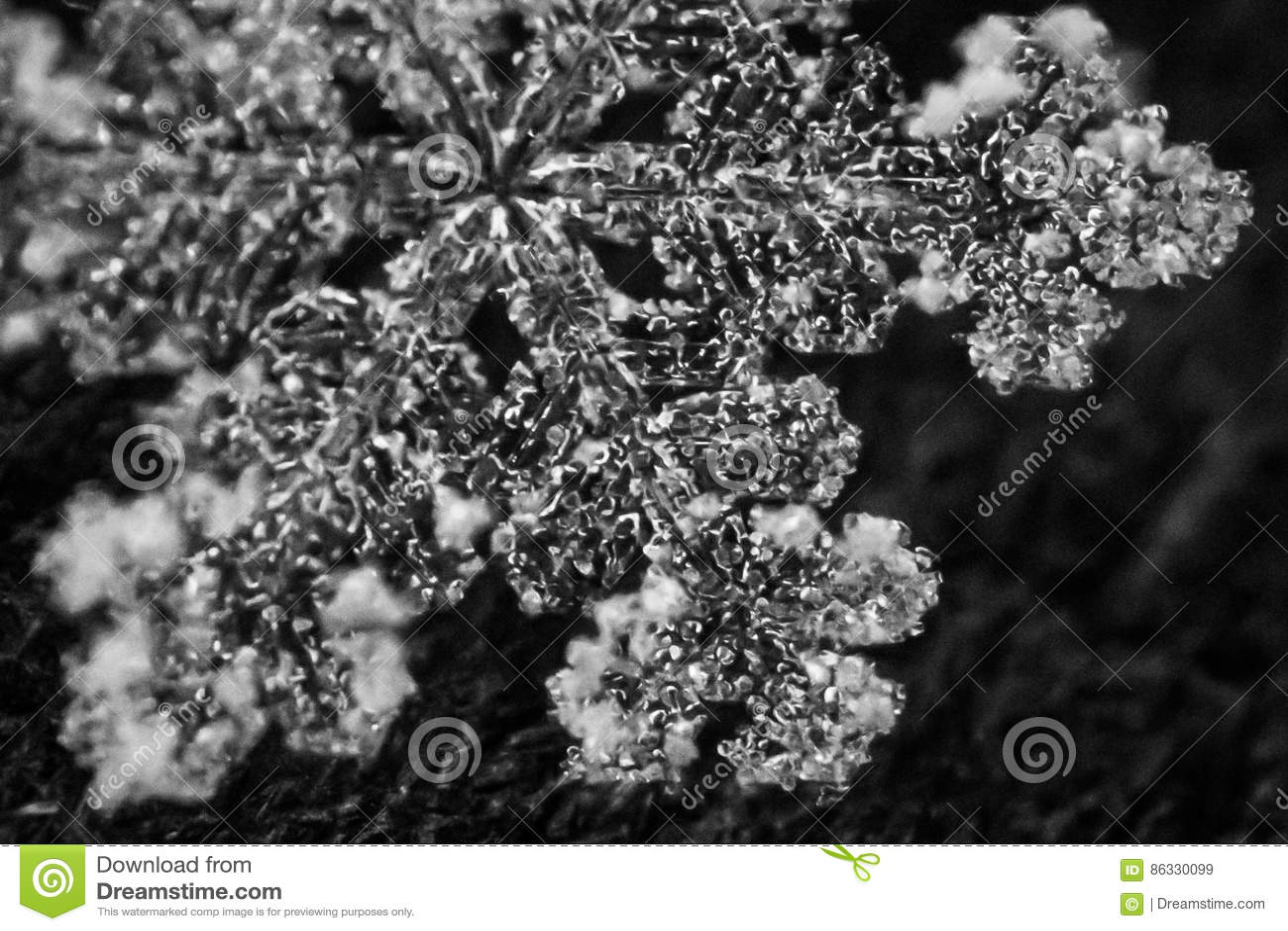 Macro Fiocco Di Neve 7 In Bianco E Nero Immagine Stock Immagine Di