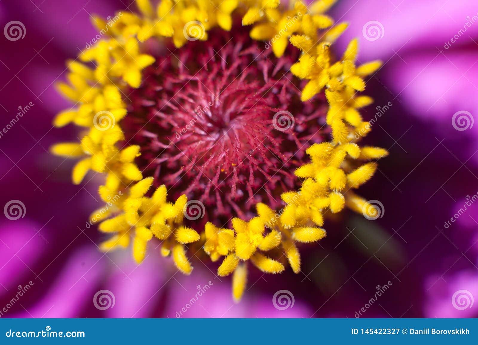 Macro fleur à la lumière du soleil