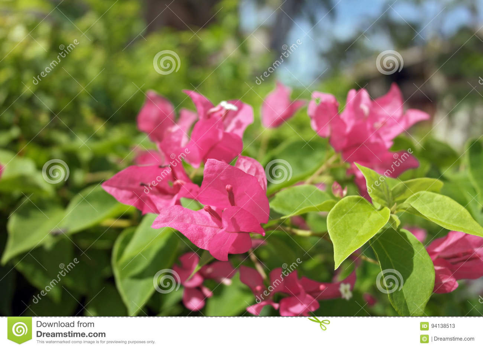 Macro fleur de tir