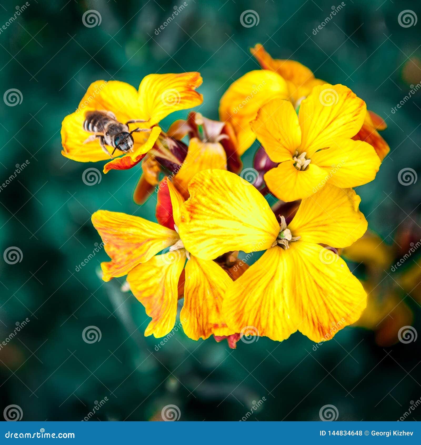Macro fleur et abeille