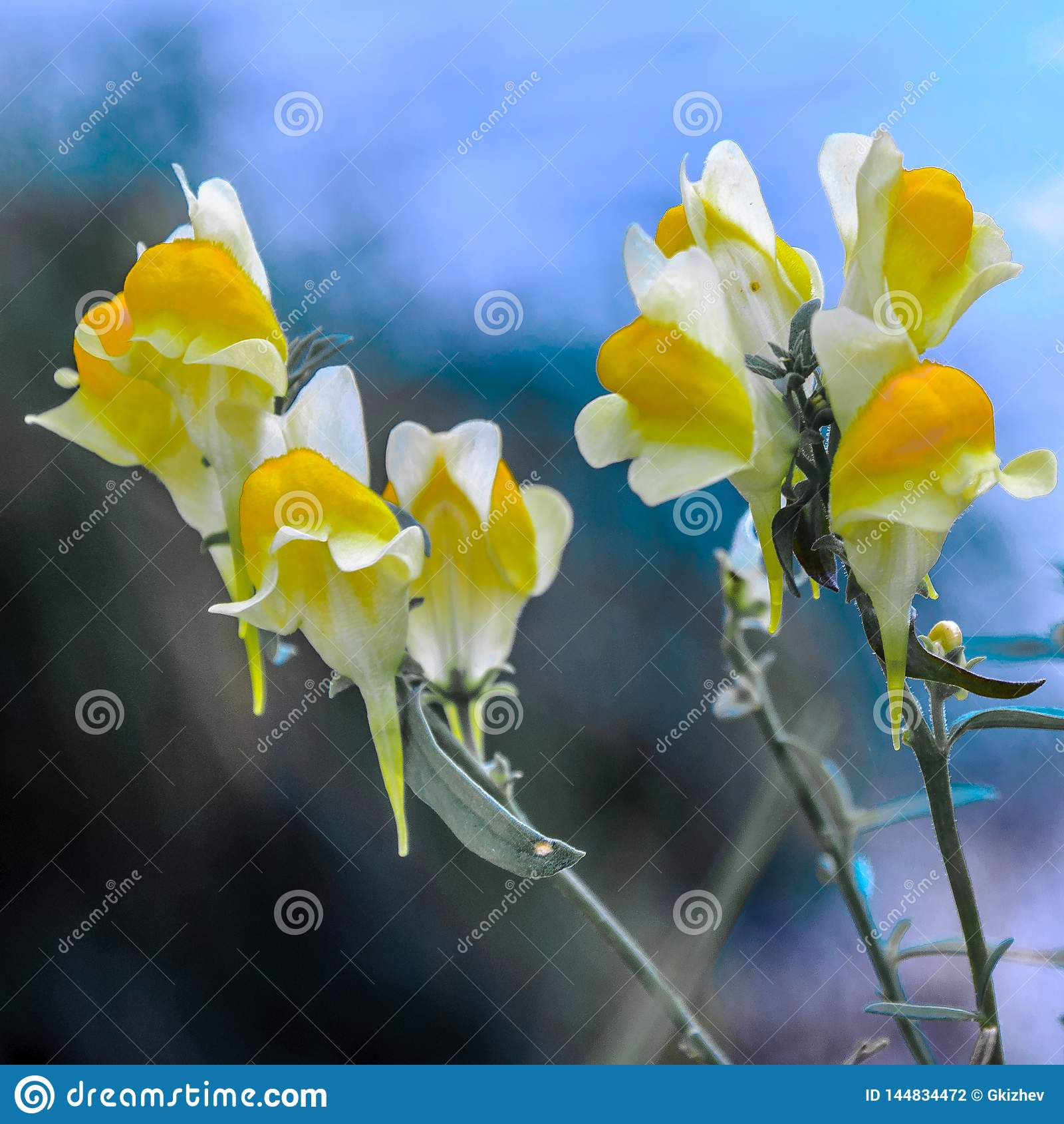 Macro fleurs jaunes