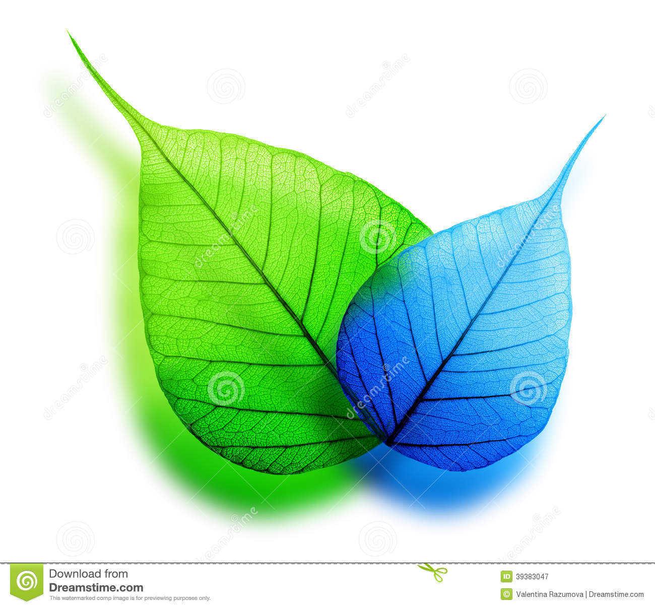 Blue Green And Grey Living Room: Macro Green And Blue Leaf Stock Photo