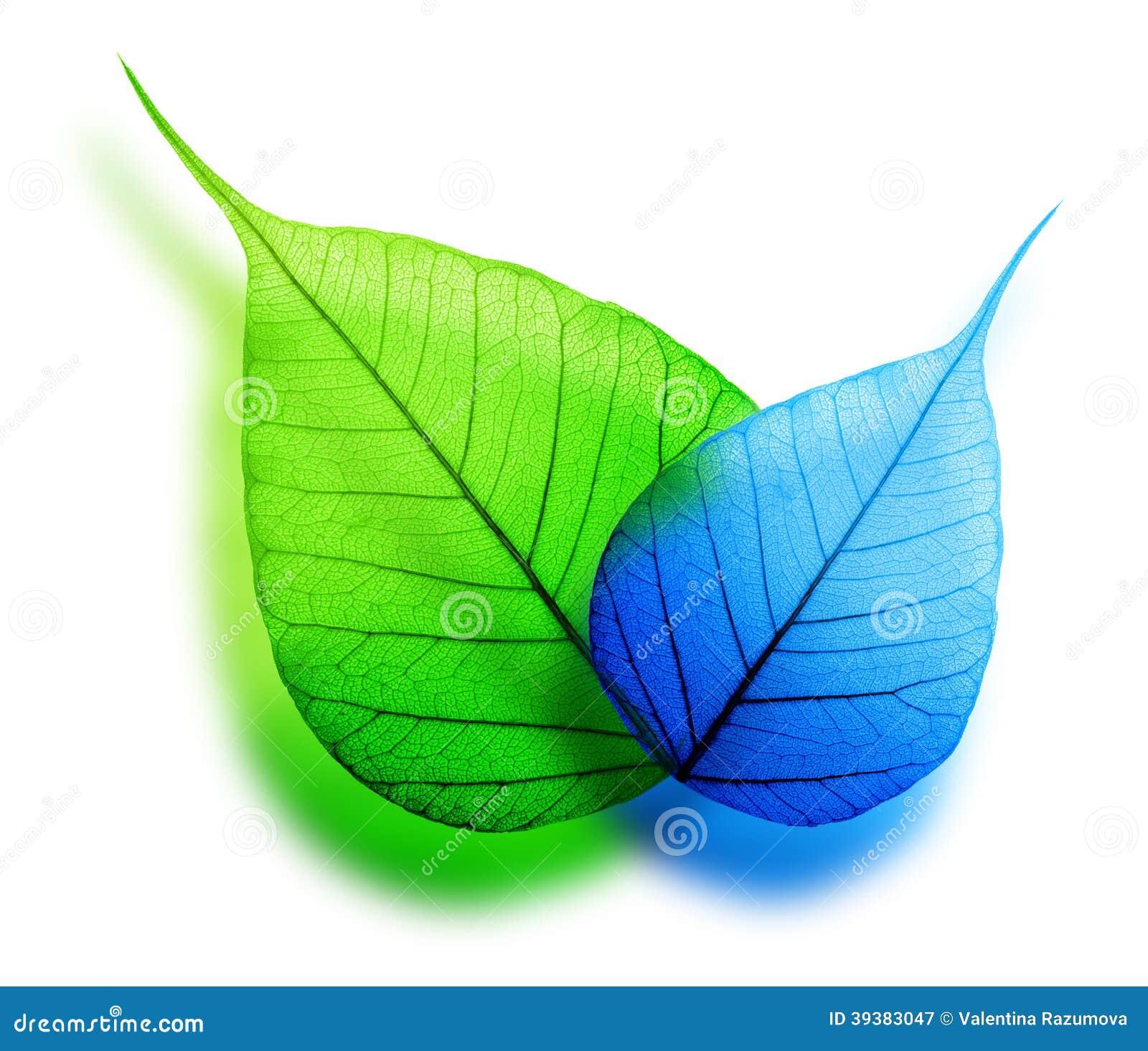 on leaf blue - photo #35